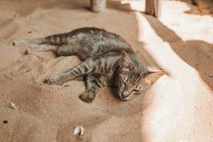 Gato que dorme na areia Imagens de Stock Royalty Free