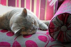 Gato que dorme no chaise Imagem de Stock Royalty Free