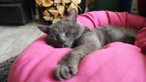 Gato que duerme cerca de la chimenea almacen de metraje de vídeo