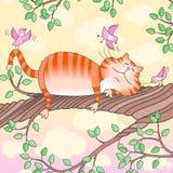 Gato que duerme en el árbol Imagen de archivo libre de regalías
