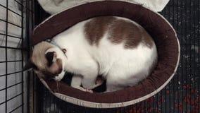 Gato que duerme en el colchón Ningún sonido almacen de metraje de vídeo