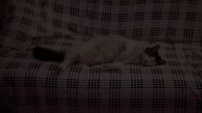 Gato que duerme en el sofá almacen de video