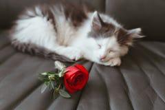 Gato que duerme en el sofá Fotografía de archivo