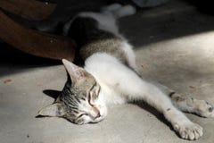 Gato que duerme en el sol de la mañana Fotos de archivo