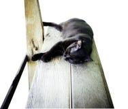 Gato que duerme en la tabla de madera imagen de archivo libre de regalías