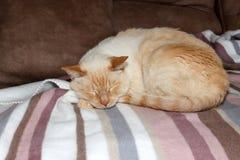 Gato que duerme en la tela escocesa fotos de archivo libres de regalías