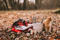 Gato que duerme en las hojas de otoño Imágenes de archivo libres de regalías