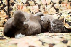 Gato que duerme en los pies del sofá para arriba Imagen de archivo