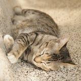 Gato que duerme en silla Foto de archivo