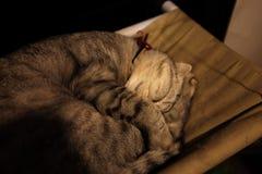 Gato que duerme en un acogedor suave verde imagen de archivo libre de regalías