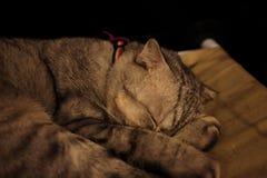 Gato que duerme en un sofá acogedor suave verde foto de archivo