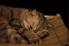 Gato que duerme en un sofá acogedor suave verde imagen de archivo