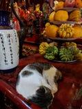 Gato que duerme en un templo budista en Hanoi, Vietnam foto de archivo