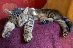Gato que duerme en una manta Imagenes de archivo