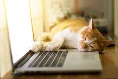 Gato que duerme sobre un ordenador portátil en el escritorio de madera Imagen de archivo libre de regalías