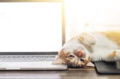 Gato que duerme sobre un ordenador portátil en el escritorio de madera Imagenes de archivo