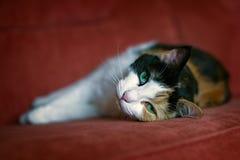 Gato que encontra-se em um sofá Fotografia de Stock Royalty Free