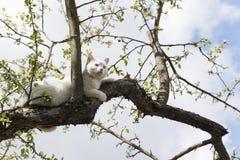 Gato que encontra-se em uma árvore Imagens de Stock