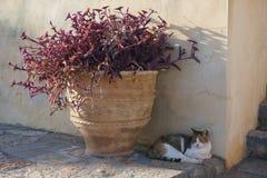 Gato que encontra-se fora pelo vaso com as flores perto da parede Imagens de Stock Royalty Free