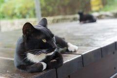Gato que encontra-se na cadeira Fotografia de Stock Royalty Free