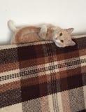 Gato que encontra-se nela para trás Imagens de Stock