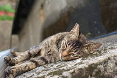 Gato que encontra-se no assoalho Fotografia de Stock