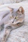 Gato que encontra-se no assoalho do cimento, foco seletivo Imagem de Stock
