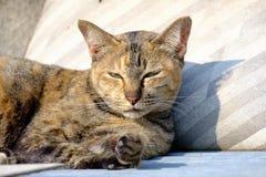 Gato que encontra-se no sol para o calor Imagens de Stock