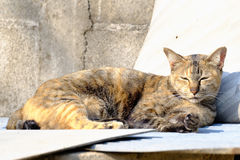 Gato que encontra-se no sol para o calor Fotografia de Stock Royalty Free