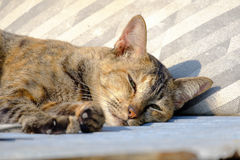 Gato que encontra-se no sol para o calor Fotografia de Stock