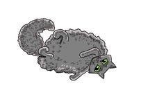 Gato que encontra-se sobre para trás Imagem de Stock Royalty Free