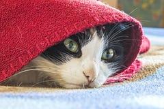 Gato que esconde e que toma sol na manta, engraçada Imagens de Stock Royalty Free