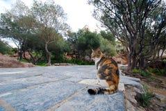 Gato que espera no trajeto da entrada da acrópole Imagem de Stock