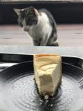 gato que espera su parte de la placa de los dulces fotos de archivo