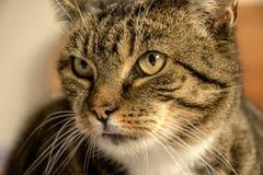 Gato que espera un bocado imagen de archivo libre de regalías