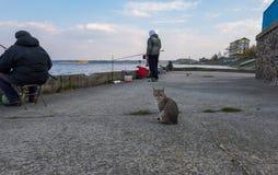 Gato que espera una captura en la pesca en el muelle del río de Dnipro en la ciudad de Ukrainka, región de Kiev, Ucrania imágenes de archivo libres de regalías