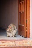 Gato que está na porta imagem de stock royalty free