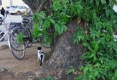 Gato que está na rua de volta à câmera fotografia de stock royalty free