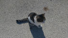 Gato que está vivendo na ilha foto de stock royalty free