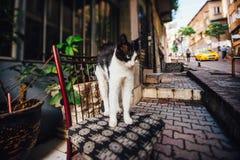Gato que estica em uma cadeira na rua Turquia, estilo de vida fotos de stock royalty free