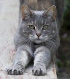 Gato que estira en la cerca Foto de archivo libre de regalías