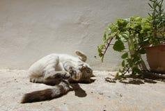 Gato que estira su pierna después de siesta Imágenes de archivo libres de regalías