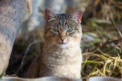 Gato que frecuenta en emboscada Imágenes de archivo libres de regalías
