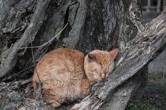 Gato que freeezing no inverno em um tom só Imagem de Stock
