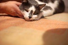 Gato que goza de ser acariciado fotos de archivo