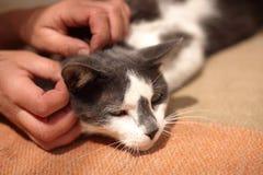 Gato que goza de ser acariciado foto de archivo