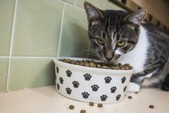Gato que goza de su comida Foto de archivo libre de regalías