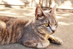 gato que guarda la casa vieja Imagen de archivo libre de regalías