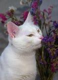 Gato que huele las flores Fotos de archivo libres de regalías