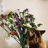 Gato que huele wildflowers asombrosos coloridos en florero en fondo fotos de archivo